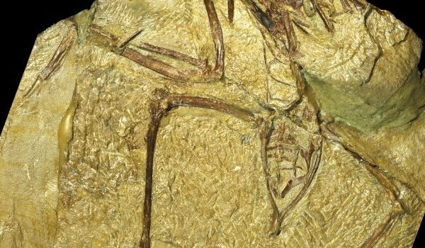FIELD TRIP-PRE- Concornis-Plate II21C